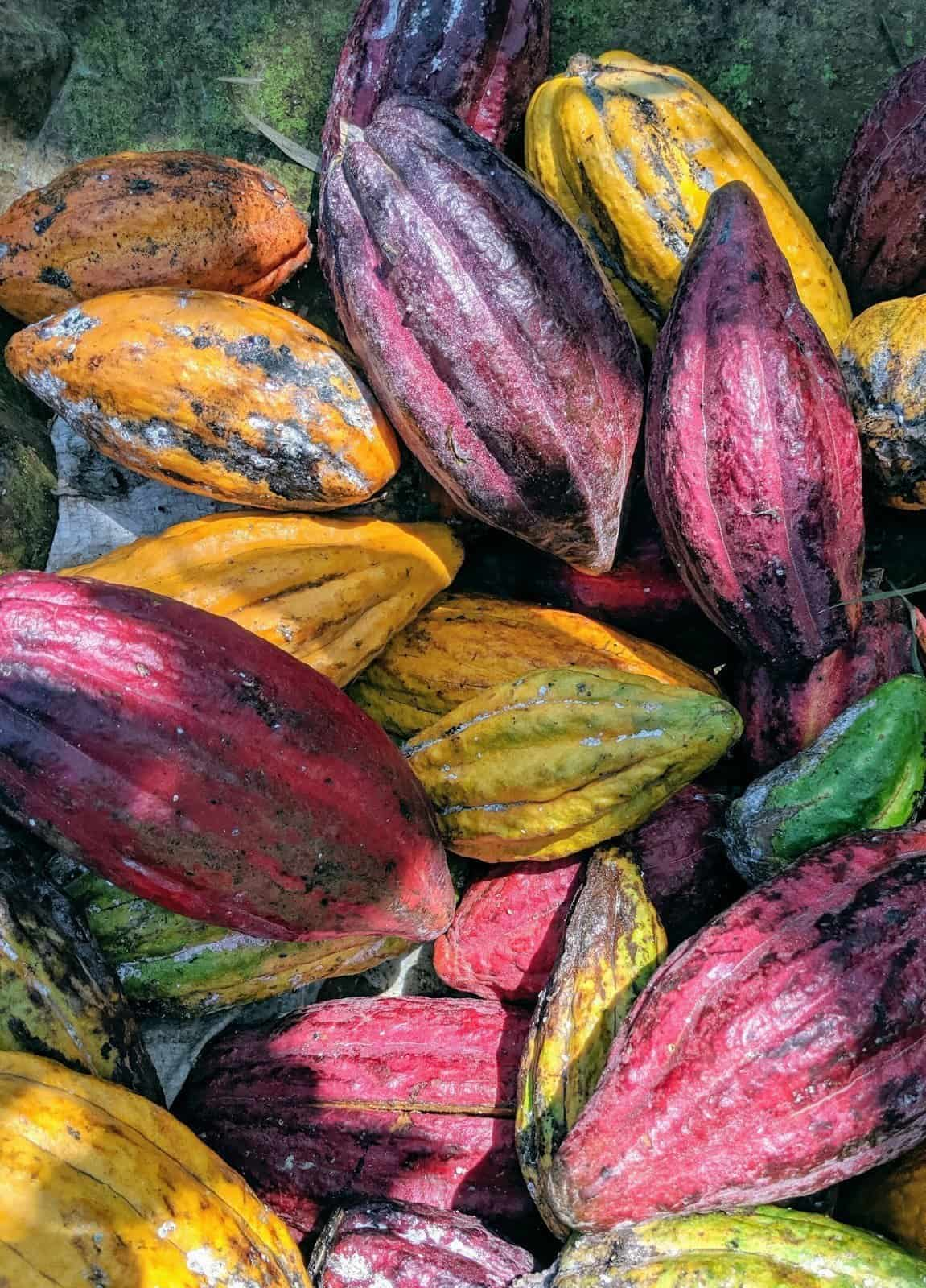 The Cacao Beans of Bali, Ohana Retreat Bali